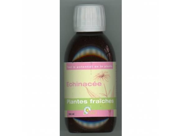 echinacea-snd-plantes-fraîches